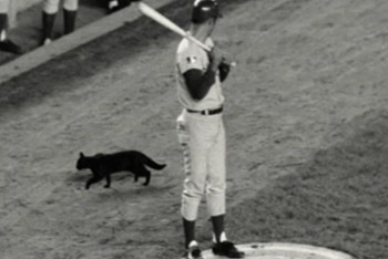 Black Cat Batter