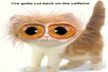 Caffeine Kitty