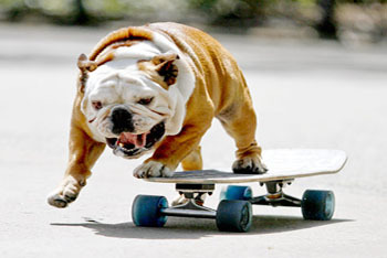 This Dawg Can Shred!