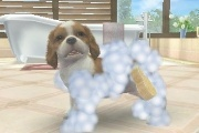 Nintendogs + Cats washing