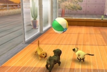 Nintendogs + Cats playing with ball
