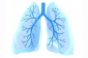 How The Lungs Work
