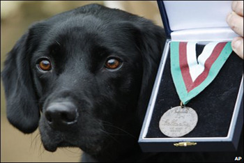 Some dogs get a medal of honour