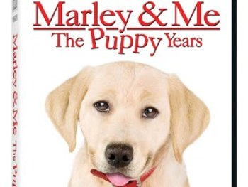 Marley and Me is available to take home today!