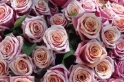 Preview rose bouquet180x120
