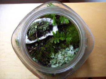 A Rain Forest Terrarium