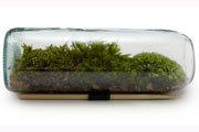 How to Make a Terrarium Planter