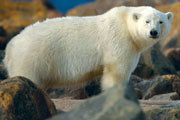 Polar Bear Adventure Sweepstakes