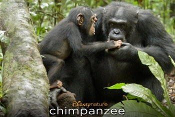 Chimpanzee Movie Review