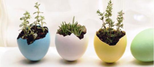 Feature feature eggshellplanter