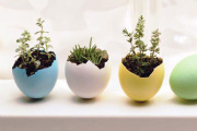Eggshell Planters Help Decorate for Spring!