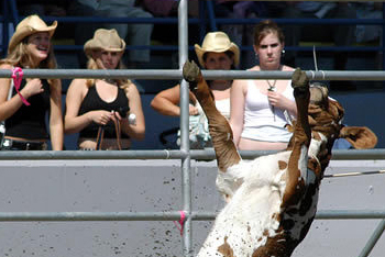 Teenagers watch Cow Strangled at Rodeo