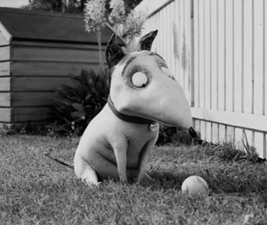 Little Frankenweenie in happy times