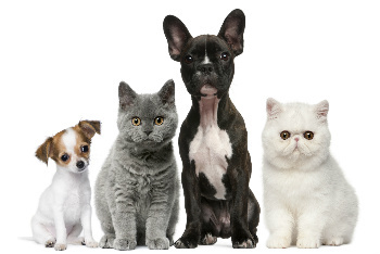 April 18 is Pet Owners Day
