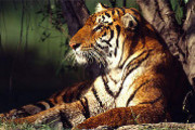 India is home to some amazing exotic animals - find out more in the Animals of India!