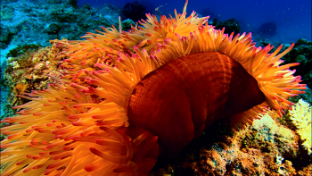 Planet Ocean explores rarely seen marine life