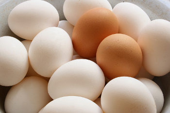 Humans have been eating egg since before recorded history