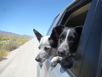 The best thing about road trips is that dogs love them too!