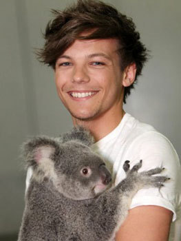 Louis cuddles a koala