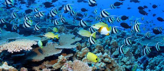 Ocean Biome Drawing Biomes of The World Aquatic