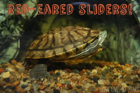 STAR Eco Station has a livestream of 4 red-eared sliders