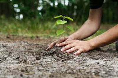 get your hands dirty tree planting