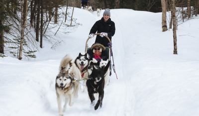 Dogsledding!