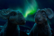 Walking With Dinosaurs The Movie Blu-ray Review