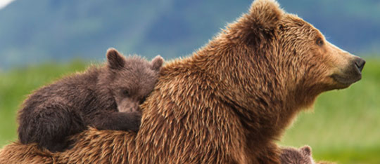 Feature bears feat