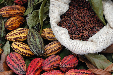 This is what cacao beans and pods look like before they become chocolate!