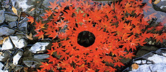 Kidzworld learns a bit about Andy Goldsworthy's nature-inspired art!