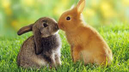 Rabbits love to be together