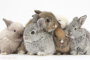 Want to learn more about rabbits? Then hop over to this article!