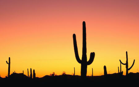 Cacti provide much-needed water to desert insects and animals.