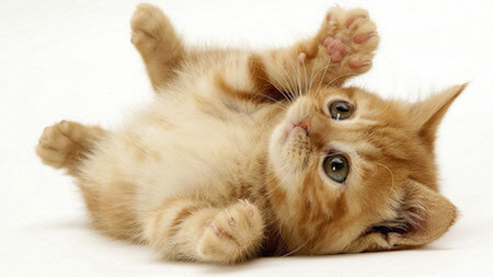 Play is good for cats, both physically and emotionally.