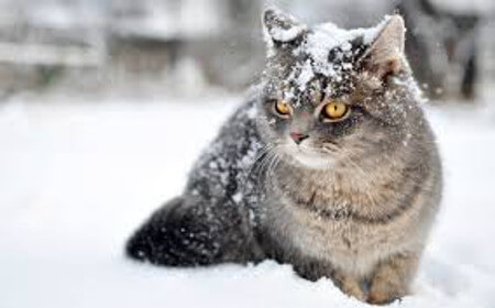 Ready for a snowball fight?