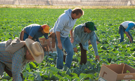 Coach spends a day as a crop picker