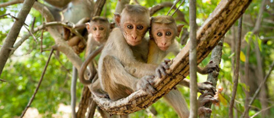 Disneynature Monkey Kingdom Movie Review