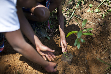 Students plant a tree