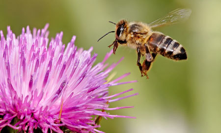 Bees might sting you if they feel threatened or scared