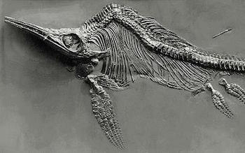 Mary Anning helped discover the first ichthyosaurus skeleton!