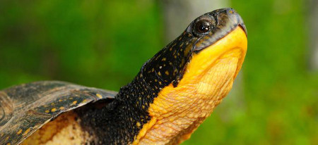 The Sierra Club helps critters great and small - like this turtle!