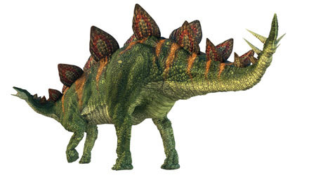 Stegosaurus' head is much smaller than their body