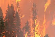Learn how you can prevent forest fires!