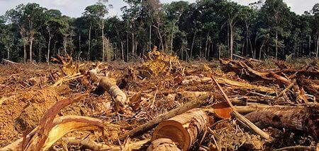 Deforestation is destroying the Amazon