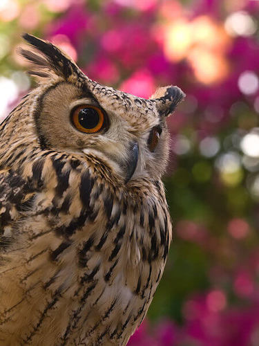 The wise owl is maybe not quite as wise as we thought!