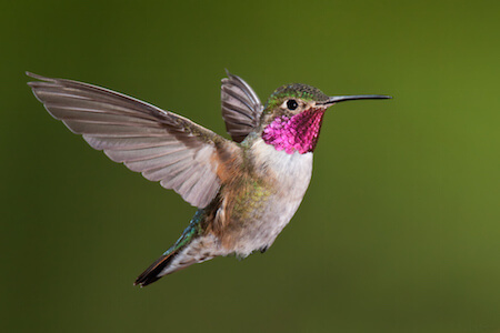 Hummingbirds are beautiful and fast!