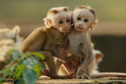 Disneynature Monkey Kingdom Exclusive Bonus Clip