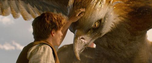 Newt (Eddie) pets the glorious Thunderbird