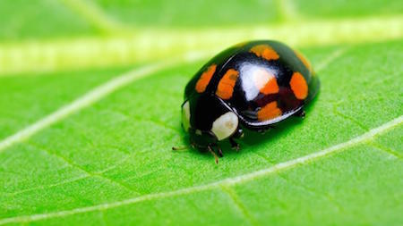 Next time you might be happy to have a ladybug land on you!
